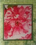 image Flowers-w3