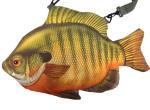 fish01